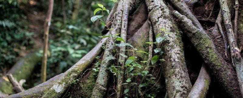 ecolodge activities 01